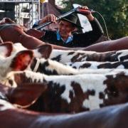 O estudo destaca a importância da agropecuária para a economia gaúcha