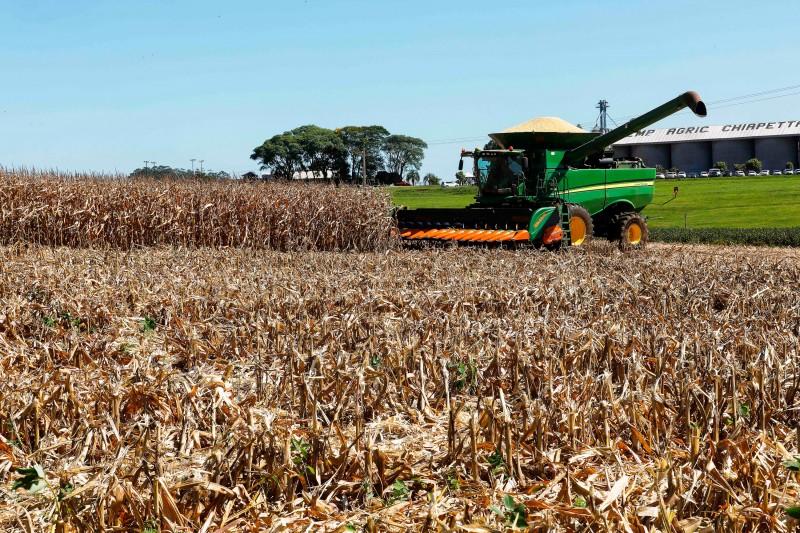 O RS conta com cerca de 180 mil produtores de milho. O cereal é exportado para 12 países, especialmente Espanha e Estados Unidos.