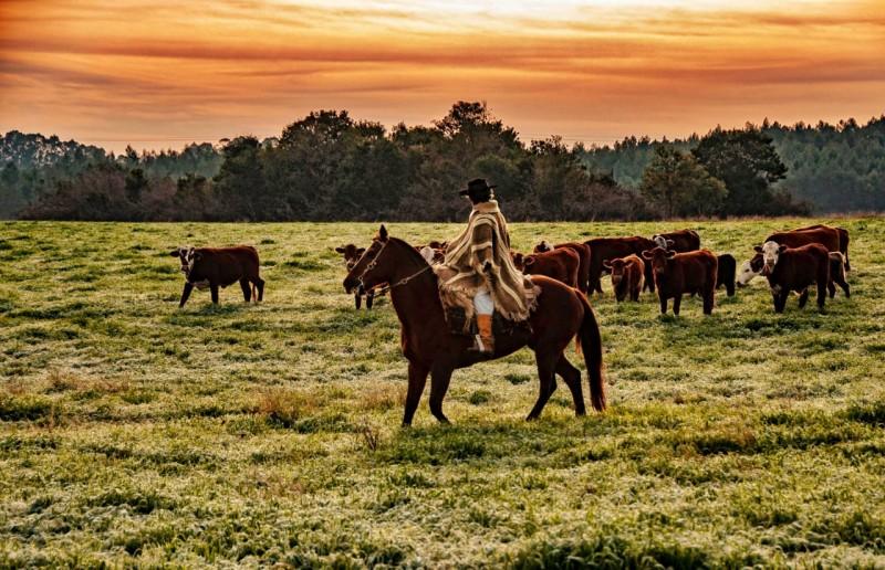 Mês de julho começa com chuva, frio e geadas no Rio Grande do Sul -  Secretaria da Agricultura, Pecuária e Desenvolvimento Rural