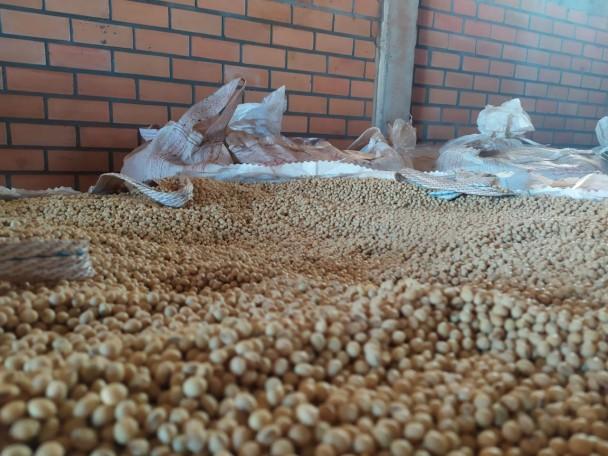 Sementes piratas de soja foram apreendidas em três municípios