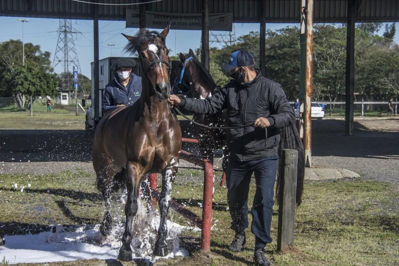 A recepção e a inspeção dos animais é feita pela equipe técnica da Secretaria