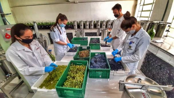O LAREN realiza desde 2001 análises físico-químicas em vinhos e derivados da uva e do vinho